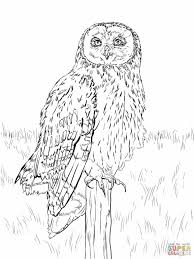 owl coloring pictures newcoloring123