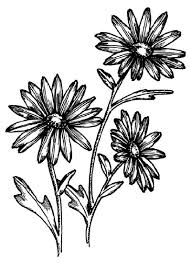 draw how to draw a daisy howstuffworks