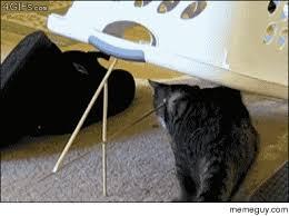 Cat Trap Meme - cat trap meme guy