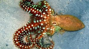 how can an octopus make itself look like another animal