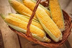 cuisiner des epis de mais comment cuire un épis de maïs ôdélices