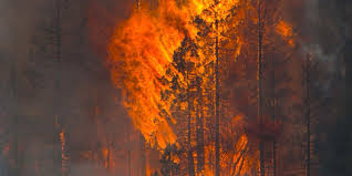 Wildfire Honey by Climate Change Cited In Arizona Wildfire Forecast