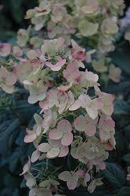 Westwood Flower Garden - 221 best flower gardening images on pinterest flower gardening