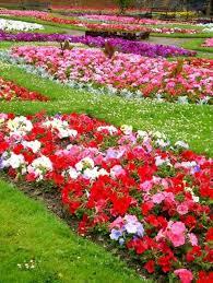 11 best flowers images on pinterest beautiful gardens flower