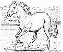 printable horse coloring coloringpagebook