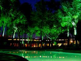 outside tree lights illuminations lighting design