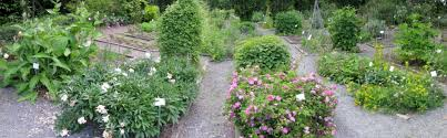 herbal garden uw medicinal herb garden home page