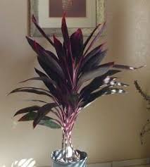 indoor plants that remove toxins from the air and plants that