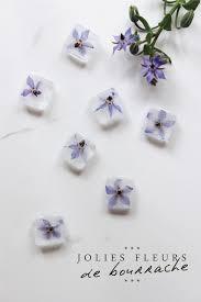 cuisiner les fleurs cuisiner avec les fleurs de bourrache ygheia