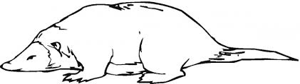 platypus coloring pages more colorings from platypus clipart panda free clipart images