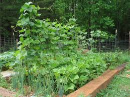 june 2014 in the garden u2022 new life on a homestead homesteading blog