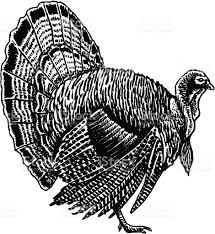 turkey for thanksgiving stock vector art 165678661 istock