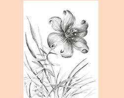 wildflower art black and white botanical print flower