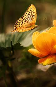 the 30 most beautiful butterflies mostbeautifulthings