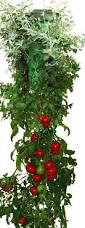 amazon com felknor ventures tt021112 topsy turvy tomato and herb