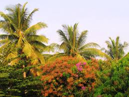 free images tree sky leaf flower floral foliage jungle