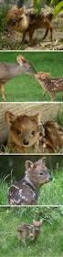best 25 deer pictures ideas on pinterest stag deer france