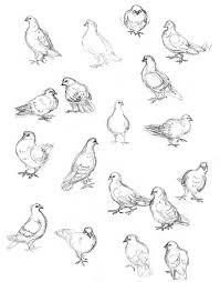 amy holliday illustration sketchbook bird drawings street