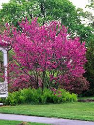 61 best garden trees images on garden trees gardening