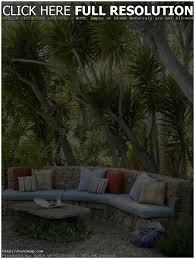 backyards terrific decorative palm trees for tropical landscape