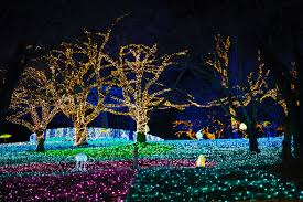 christmas light park near me free images tree branch light night flower amusement park