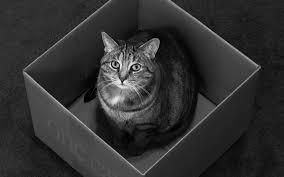 schrödinger s cat is both alive and dead quantum activist