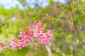 pink flower tree blossom pink flower tree nature background flowers