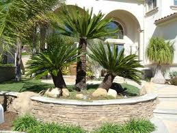 landscaping ideas on budget front yard with palm trees amys