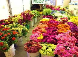 flower wholesale wholesale customers the gardener s workshop