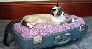 Cats In Dog Beds Thirteen Aww Inspiring Pet Beds Made From Repurposed Suitcases