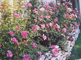 rose bed design for a small garden flower bed ideas designs for garden