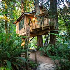 amazing whimsical tree house the ultimate treehouse goes up for