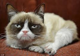 Tard The Grumpy Cat Meme - grumpy cat has made its owner 64million daily mail online