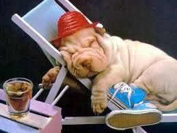 Nada mejor que una buena siesta