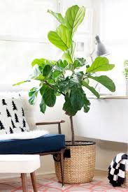 on trend indoor plants for your living room healthy girls love