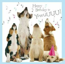 happy birthday dogs cute video that could be played on the