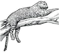 snow tiger coloring page snow leopard coloring pages snow leopard coloring pages leopard