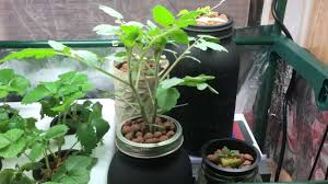 indoor garden small greenhouse quick tour youtube
