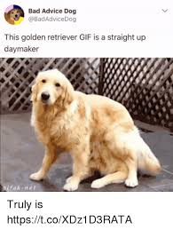 Advice Dog Memes - bad advice dog this golden retriever gif is a straight up daymaker
