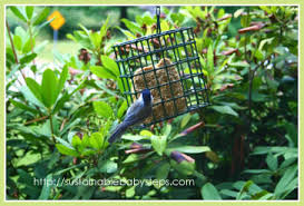Backyard Habitat Creating Your Own Natural Backyard Bird Habitat Sustainable Baby
