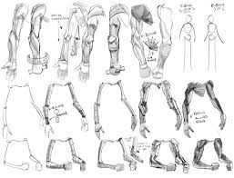 142 best anatomy for artists arms and hands images on pinterest
