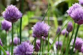 beautiful plants ten tips for creating beautiful gardens the micro gardener