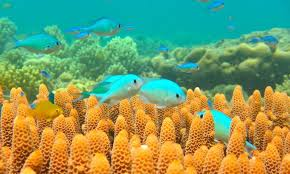thanksgiving reefs coral reef global warming the visible helpers