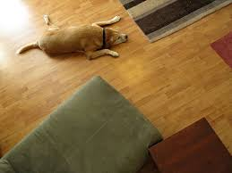pet bedroom flooring ideas and options