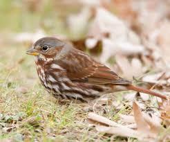 cornell u0027s on line guide to birds audubon missouri