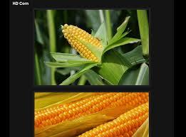Porn Memes - corn porn meme album on imgur