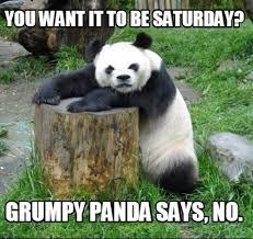 Panda Meme - meme creator grumpy panda meme generator at memecreator org