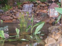 photos ecosystem ponds orlando florida water garden experts