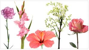 edible flower garnish edible flowers list for use in cooking and garnishing teleflora
