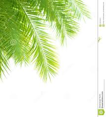 palm tree leaves border stock photo image of branch 32541024